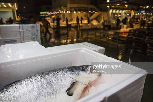 A fresh salmon sits in a polystyrene box on a fish stall inside the Mercamadrid fish market in Madrid Spain on Friday Dec 18 2015 Spaniards go to the...