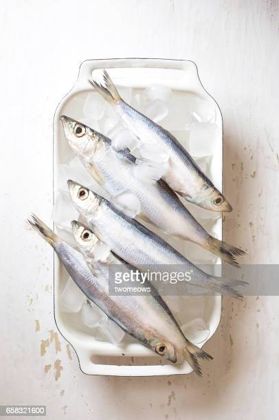 Fresh sardine on white background.