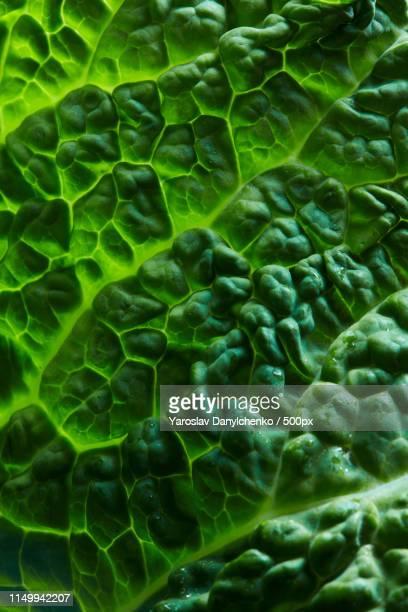 fresh savoy cabbage leaf - マクロ撮影 ストックフォトと画像