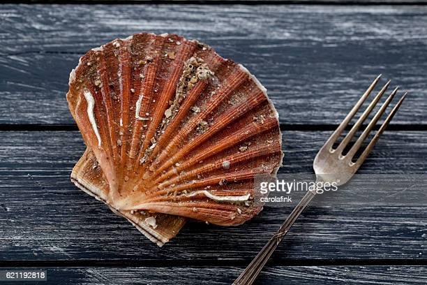 fresh scallop - carolafink stock-fotos und bilder