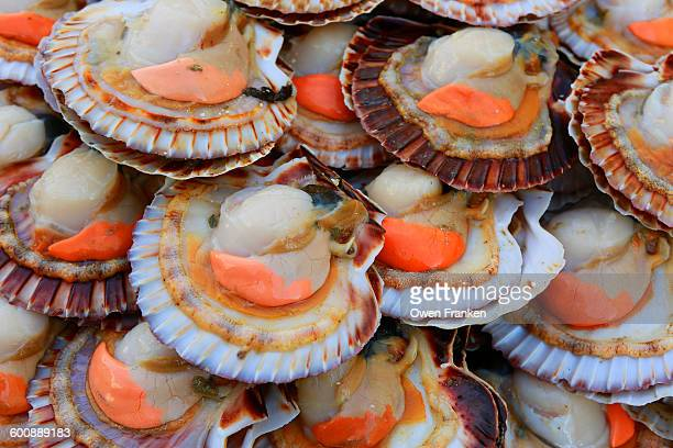 Fresh scallops for sale in a fish market