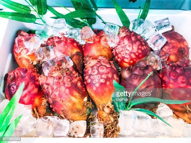 Fresh sea squirts kept with ice cubes displayed for sale