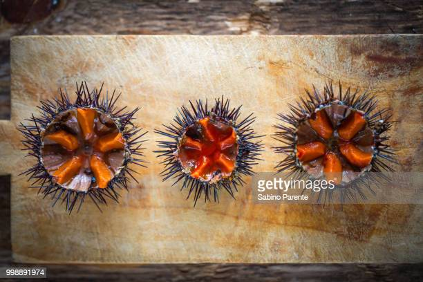 fresh sea urchins - sea urchin stock pictures, royalty-free photos & images