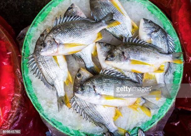 fresh seafood for sale in morning market - xiamen fotografías e imágenes de stock