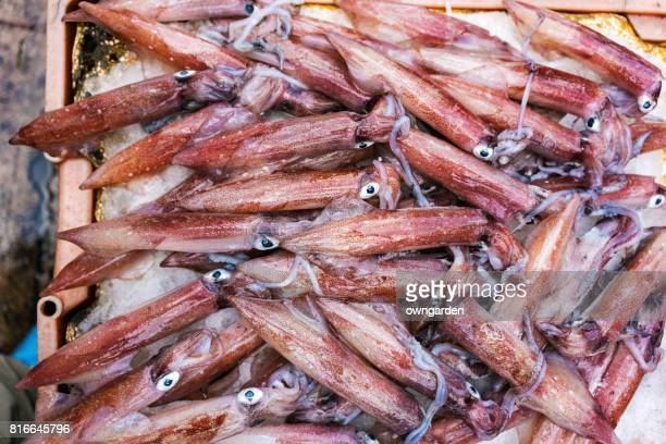 Fresh seafood for sale in morning market