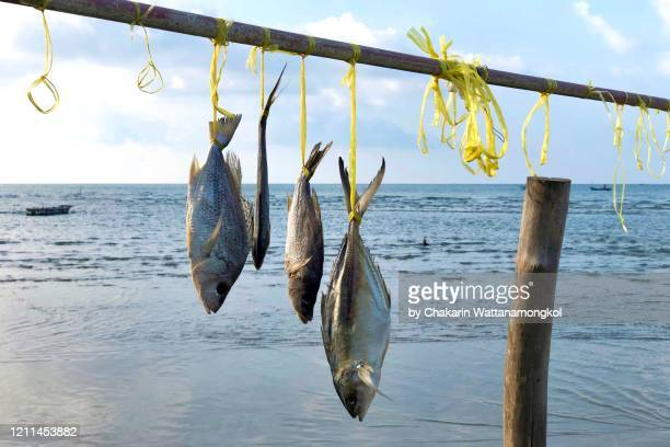 fresh seafood from the sea : fishes hanged on the bamboo wood by the sea. - 干物 ストックフォトと画像