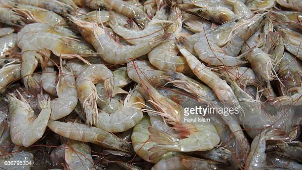 Fresh Shrimps background texture