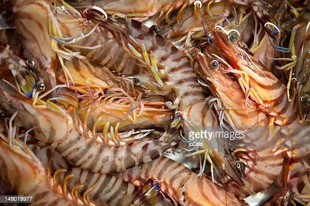 Fresh shrimps for sale at Tsukiji Market