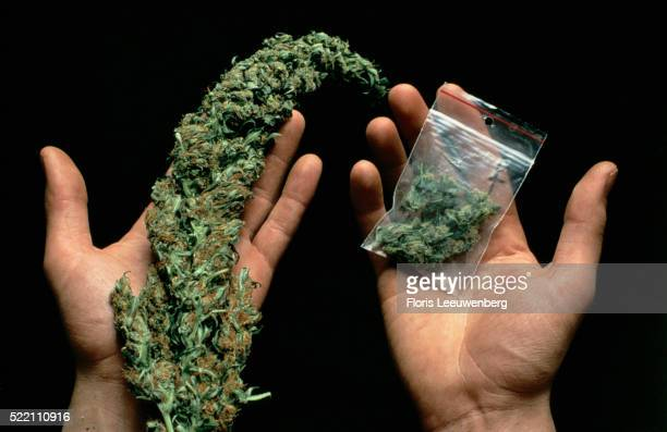 Fresh Skunk Buds and in Packet