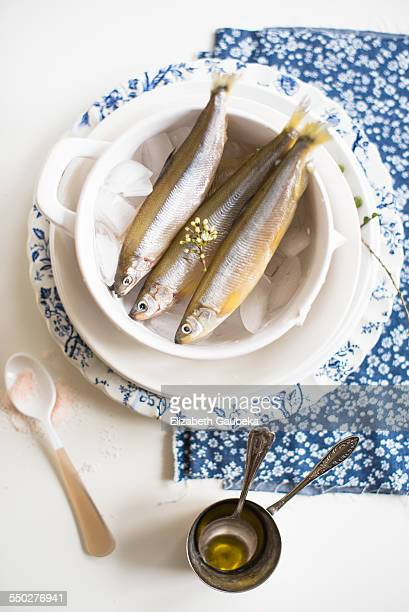 Fresh Smelt on Ice Cubes