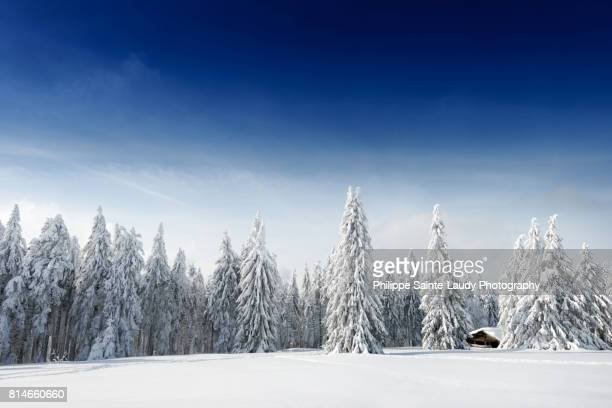 fresh snow - deep snow stock pictures, royalty-free photos & images