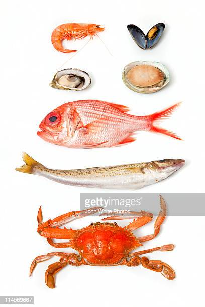fresh south australian seafood - seafood stock pictures, royalty-free photos & images
