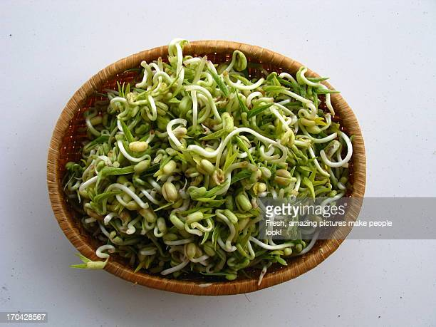 Fresh soy bean sprouts in wicker basket