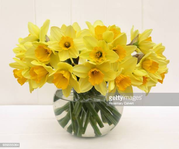 fresh spring daffodils in vase on white. - bunch of flowers stock pictures, royalty-free photos & images
