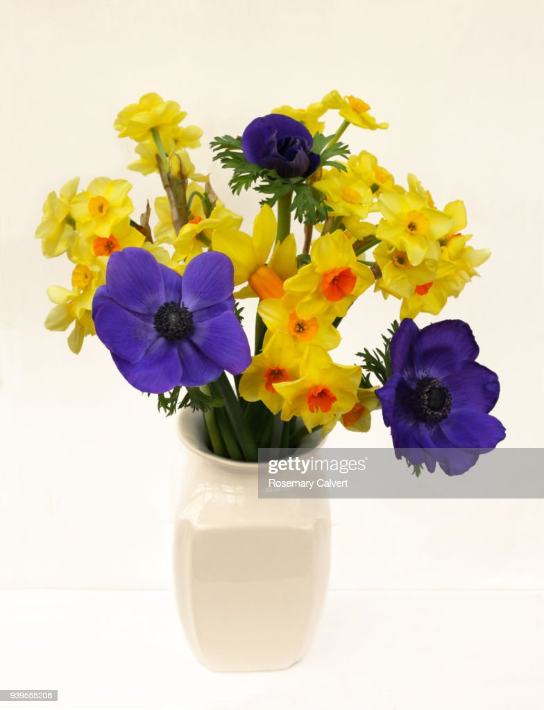 Fresh spring flowers daffodils anemones in vase on white stock photo fresh spring flowers daffodils anemones in vase on white stock photo mightylinksfo
