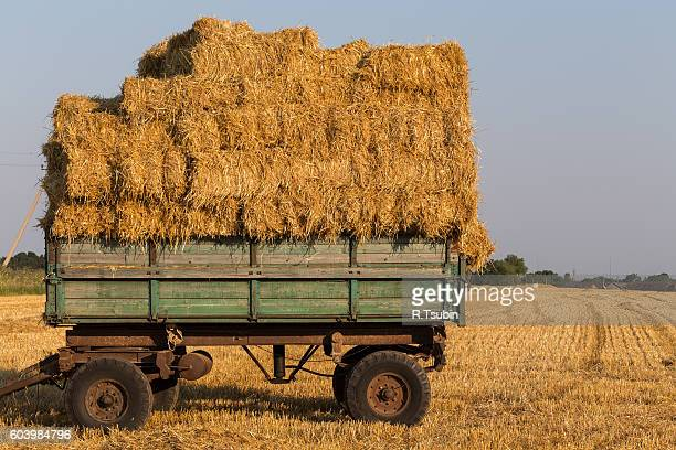 Fresh straw hay bales