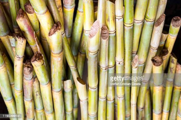 fresh sugar cane background - サトウキビ ストックフォトと画像