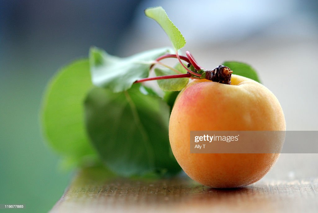 Fresh summer apricot : Stock Photo