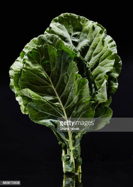 fresh swiss chard - farm to table stock photos and pictures