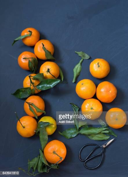 fresh tangerines and scissor on dark background