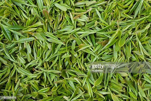 fresh tea leaves background - tea leaves stock photos and pictures