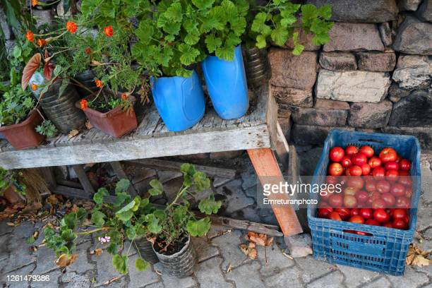 fresh tomatoes for sale in a blue crate along the wall. - emreturanphoto stock pictures, royalty-free photos & images