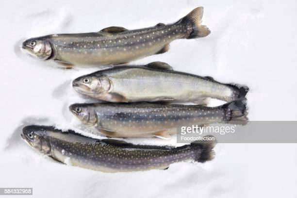 fresh trout and char - speckled trout stock photos and pictures