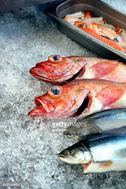 Fresh Trout And Red Snapper On Ice