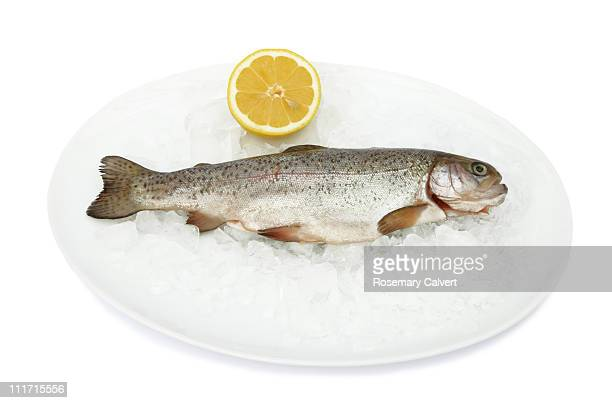 Fresh trout on ice with lemon.