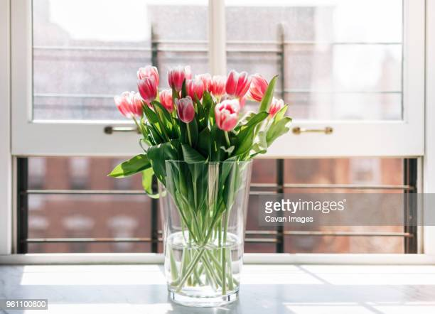 fresh tulips in vase on window - vase stock pictures, royalty-free photos & images