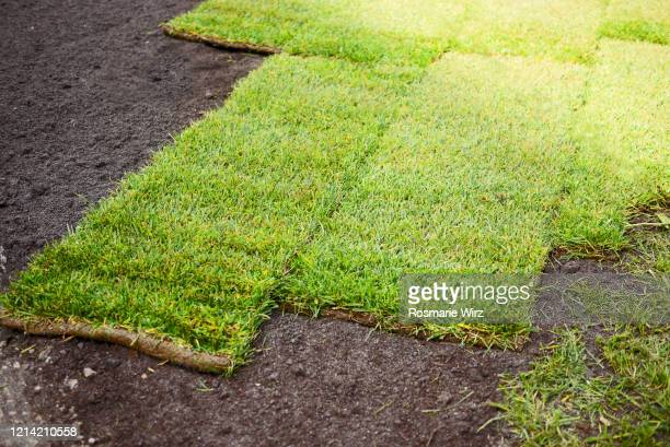 fresh turf squares on prepared ground. - turf stock pictures, royalty-free photos & images