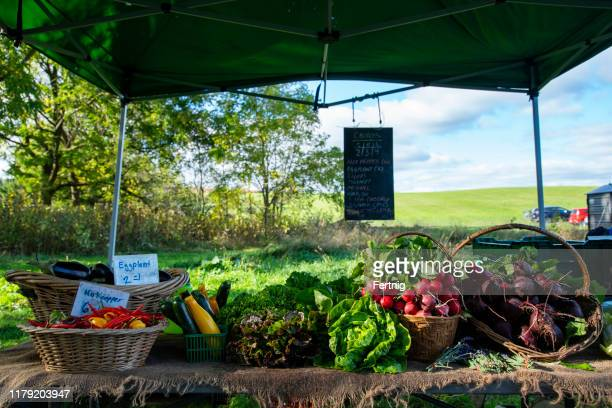 fresh vegetables and produce at a farm's market - organic farm stock pictures, royalty-free photos & images