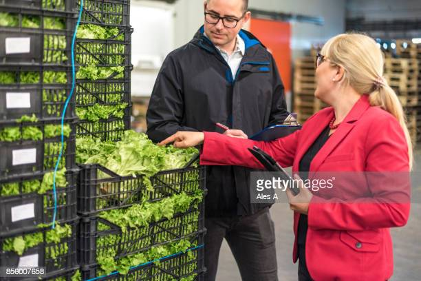 fresh vegetables in warehouse - inspector stock pictures, royalty-free photos & images