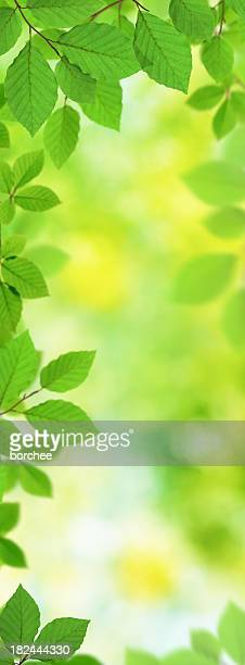 Fresh Vertical Leaves XXXL