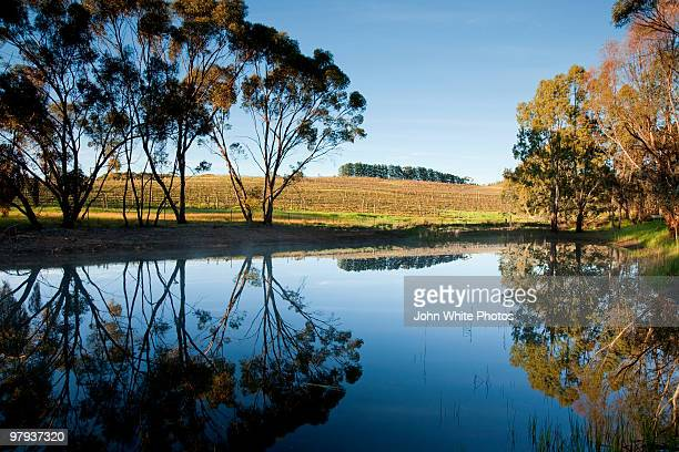 fresh water dam clare valley - valley stock pictures, royalty-free photos & images