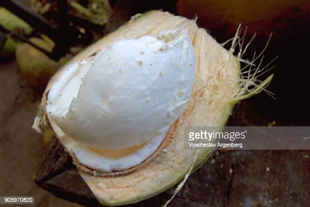 fresh white coconut meat - argenberg stock pictures, royalty-free photos & images