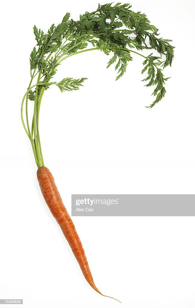 Fresh whole carrot : Foto de stock