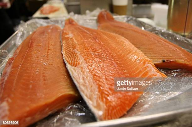 Fresh wild and farmed Loch Duart salmon filets are seen on a tray at the San Francisco Fish Company April 11 2008 in San Francisco California The...