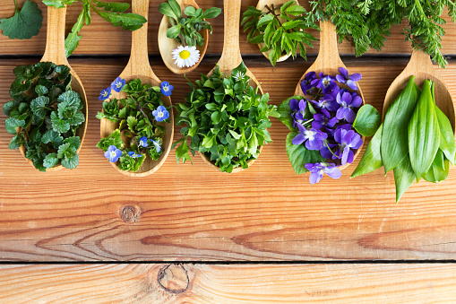 Fresh wild edible spring herbs on wooden spoons 943761866