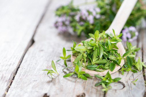 Fresh Winter Savory on a wooden spoon 496813571