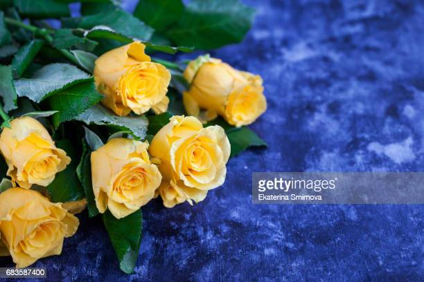 fresh yellow roses flowers on blue painted wooden background - yellow roses stock photos and pictures