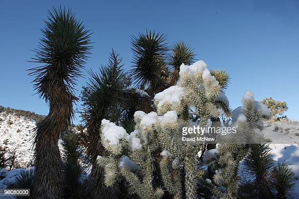 Freshfallen snow blankets the desert foothills and mountains on the north side of the San Gabriel Mountains on January 23 2010 northwest of...