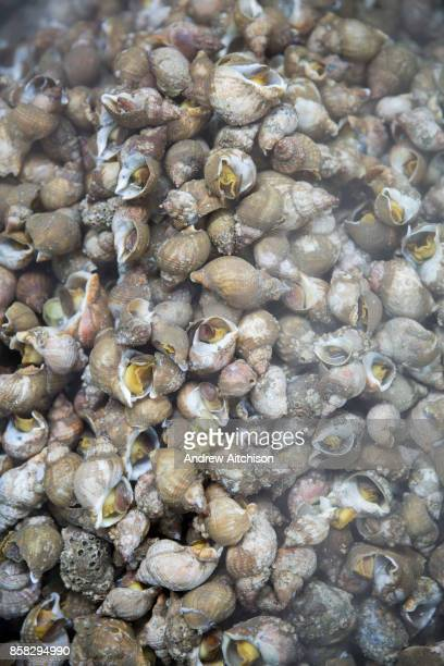 Freshly boiled Whelks still steaming ready to be shelled Folkestone Trawlers process manage and market all fresh fish that is landed into Folkestone...
