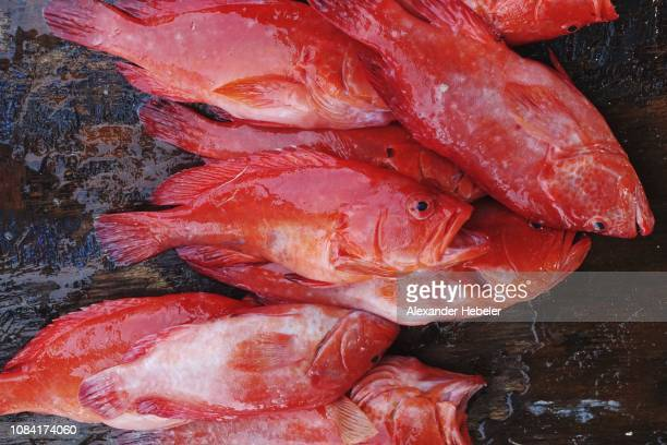 freshly catched fish, red snapper for sale - redfish stock photos and pictures
