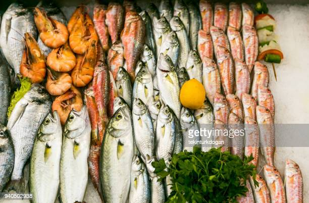 freshly catched fishes at fishmarket of kadikoy istanbul turkey - istanbul province stock photos and pictures
