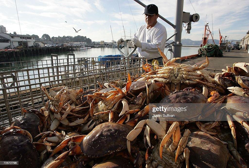 Commercial Crab Season Begins In Bay Area : News Photo
