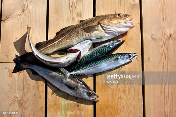 Recién salidos del pescado que descansan en el muelle de madera
