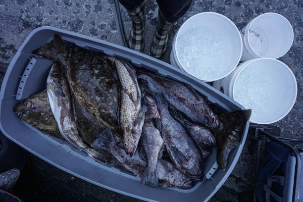 Freshly caught rockfish, halibut, and lingcod