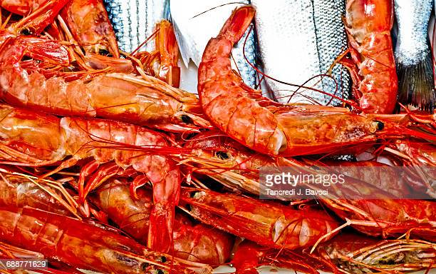 freshly caught shrimps - bavosi stock pictures, royalty-free photos & images