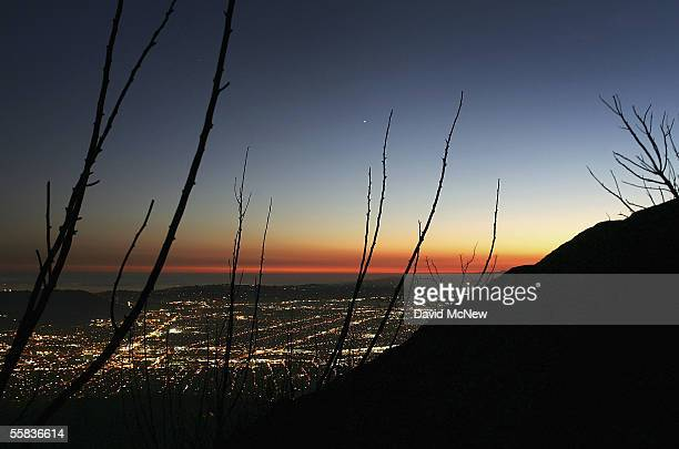 Freshly charred branches are silhouetted against the lights of the Los Angeles metropolitan area at sunset on October 1 2005 in Burbank California...